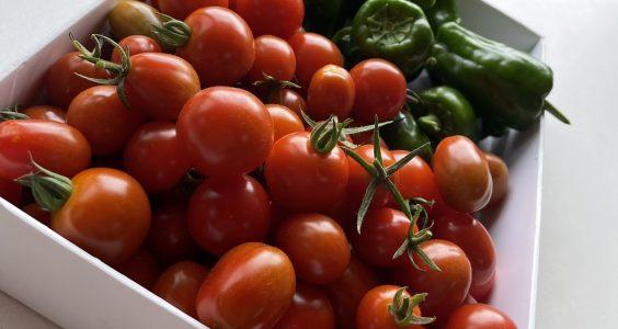 しろやま第2校 🍅夏の野菜の売り上げについて🍅